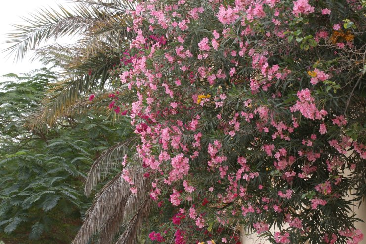 Laura's Voice Whispers from an Angel_Suicide at the Burj Khalifa_Mubarak bin Fahad_Leona Sykes_52120289_991690384373991_3345978603908104192_o